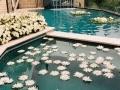 pool-ceremony