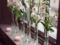 window-blooms